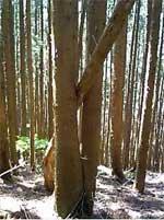 変わった木の写真