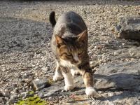 路地裏から現れた猫