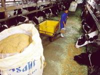 モルトフィードは牛などの飼料として利用されます