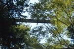 私市 吊り橋 星のブランコ