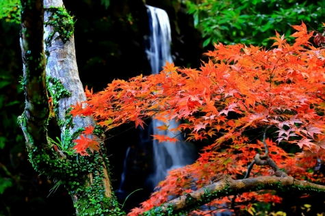 落水の彩香