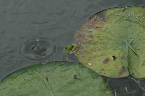 偶然の雨粒