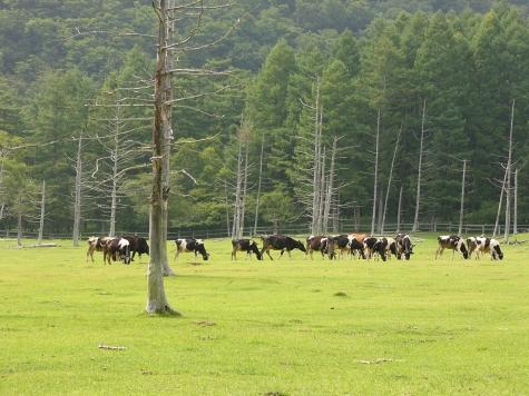 栃木県 日光 光徳牧場