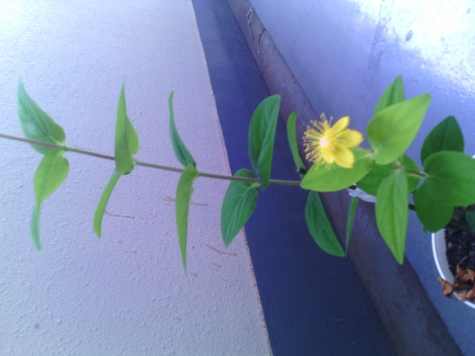 このお花は何でも名前か教えて下さい