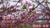 春の花を追いかけて