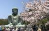 初鎌倉で桜と大仏さま